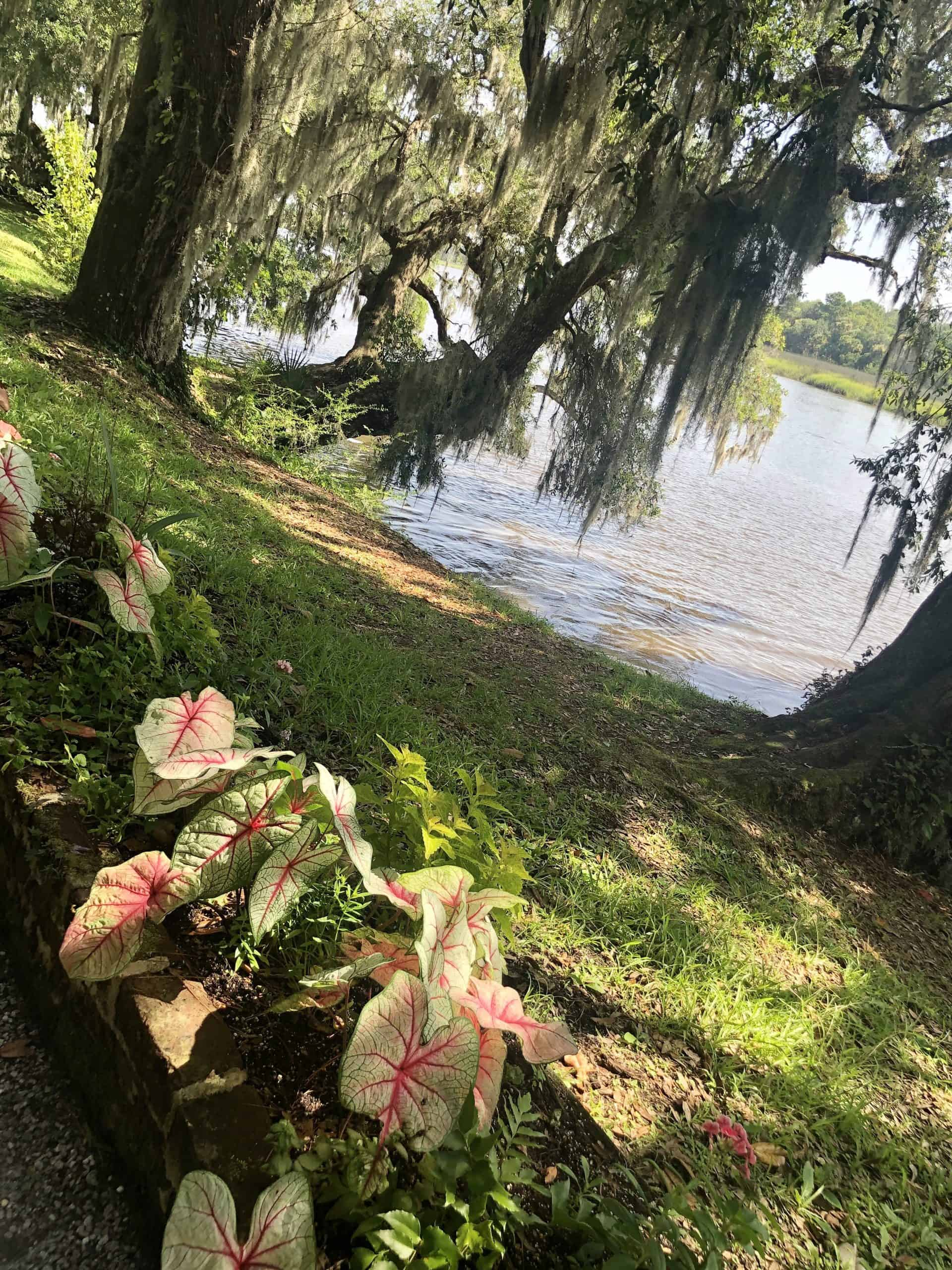 A Beautiful View of Magnolia Plantation & Gardens in Charleston, SC