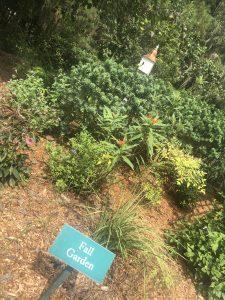 Savannah+Botanical+Garden