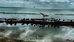 Higgs Beach in Key West Florida
